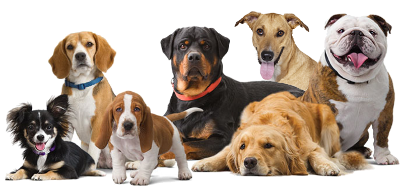 Pictures Of All Different Types Of Dogs